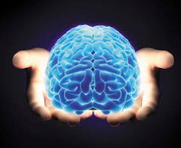 desenvolver minicérebros humanos